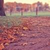 秋ですね…