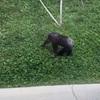 旭山動物園に行ってみた!