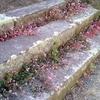 秋の剪定-ローメンテな庭への道も一歩から