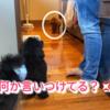 2021.3.13 【悪役令嬢トロ】 可愛いけど、行動が、、、 Uno1ワンチャンネル宇野樹より