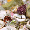 水中撮影:181208 親ダンゴ/梶の浜ビーチ・城ヶ島シュノーケリング行の事