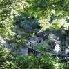 7月の六本杉公園に行ってきました