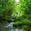 4月24日は「植物学の日」~牧野富太郎さんの名言(*´▽`*)~