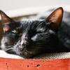 うちのお猫様達のお気に入りベッド