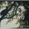 木に掛け上るネコ完成しました‼️