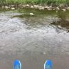 朝から川をお散歩です