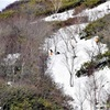 7年前も雪崩、報告されず 那須雪崩事故と同じ講習会で