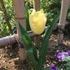 昼下がりの 庭の花 ^^