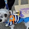 ❝たんばらラベンダーパーク①(入場編)❞ 愛犬とおでかけ-群馬県観光🎵  2021年7月16日②