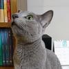 猫の聴力は人の4倍!イビキは騒音?