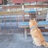 犬にダニがついた!?予防法、取り方は?飼い主にも感染する?