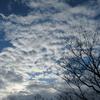 ◆11/19      天気予報に⛄が登場した朝。