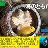 海のともだち ~ 癒しのダイビング水中写真集 ~ 【Kindleオーナーライブラリー】