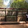 超絶可愛い、生きた化石 カモノハシ。オーストラリア、ケアンズおすすめ観光③ゴールデンルート