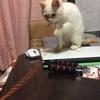 迷い猫 茶々丸②