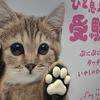 猫の肉球 ~招きネコさんからの投稿です~