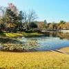 県西総合公園の修景池(茨城県筑西)