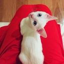 白猫まににっき