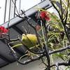 木瓜の実の熟して未だ花も咲く