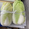 白菜と里芋!