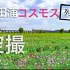 話題の『コスモス列車与田浦』空撮