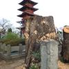 お山の桜の木がまた、、、