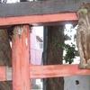 木の鳥居と鉄の鳥居