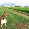 朝と夕方で散歩コースが様変わり!?