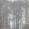 雪の戸隠(冬の長野旅行)