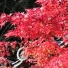 大谷祖廟、知恩院の紅葉②観光47...20191201京都