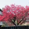 えぃじーちゃんのぶらり旅ブログ~九州編20190311佐賀県佐賀市