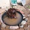 【メダカのビオトープ立ち上げ】プラスチックの植木鉢でメダカのビオトープを立ち上げました