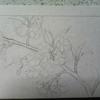 日本画 基本的な下図の作り方①
