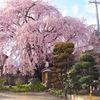 【前編】長野の春を感じたくて、移動距離1000kmかけた桜めぐりの全記録をご覧ください。【社寺・御朱印情報付】