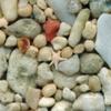 博物館のイベント「いろいろな砂を顕微鏡で見てみよう!」24日開催