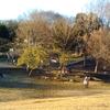 ○●岸根公園に遊びに行ってきました