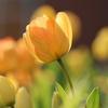 【お知らせ】2017年3月20日(祝) 春のスピリチュアルお茶会