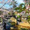 桜を眺めながらトレーニング