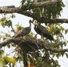 アンコールワット個人ツアー(207)カンボジアのエコシーリズムと野生動物保護区