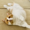 人間も猫も、歯は大事。飼い主じゃんの親知らず抜歯後の食事について。