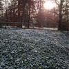 【ドイツ】ヴュルツブルクでもついに初雪 去年より寒い