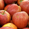 1日1個のリンゴは医者を遠ざける