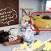辻希美の長女《娘》noaちゃんのポムポムプリングッズが可愛い(*^^*)どこで買える!?!?