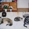 猫の多頭飼いが失敗したり崩壊する原因と理由