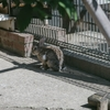 親水公園ウサギ舎のウサギ