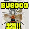 【JACKALL】大人気の究極虫系ルアー「BUGDOG」出荷!