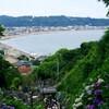 認知症高齢者、見守り強化!兵庫県の取り組みをご紹介します。