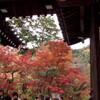 【2011】京都旅行記⑥ 紅葉の永観堂~祇園散策【観光】