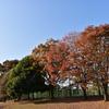 🍂栃木県 栃木市大平運動公園の紅葉🍁