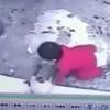 お手柄猫、階段から転落しそうになった赤ん坊を全力で守る(動画あり)